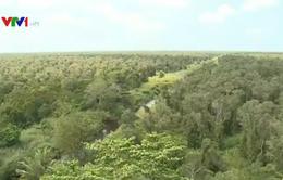 10.000 ha rừng ở Bình Dương rình rập cháy cấp 4