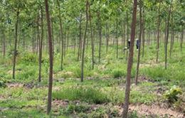 Đóng cửa rừng khu vực Tây Nguyên là quyết định hết sức cấp thiết