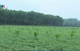 Nhiều công ty thủy điện chây ì việc trồng lại rừng thay thế