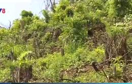 Có thể truy tố hình sự vụ phá rừng đầu nguồn tại TT-Huế