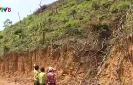 Thủ tướng chỉ đạo đóng tất cả cửa rừng tự nhiên