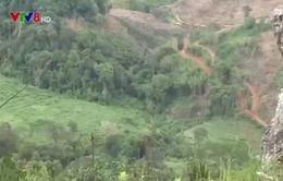 Thủ tướng yêu cầu xử lý nghiêm hành vi phá rừng ở Kon Tum