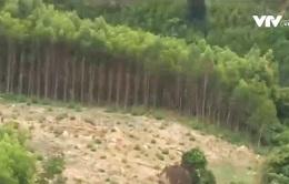 """Hàng nghìn ha đất rừng Gia Lai bị """"xà xẻo"""" từng ngày"""