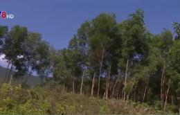 Cách làm hay trong xử lý đất rừng lấn chiếm