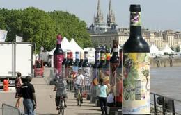 Sản lượng rượu vang của Pháp giảm kỷ lục trong 30 năm do mất mùa nho