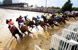 Người dân Hà Nội sắp được xem đua ngựa
