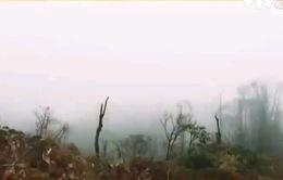 Du khách Anh mất tích tại Fansipan: Huyện Sapa đang gấp rút tìm kiếm