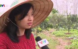 Cô gái Hà Nội từ bỏ thu nhập cao về làm nông nghiệp