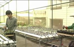 Doanh nghiệp đầu tư sản xuất nông nghiệp - Xu hướng đầu tư mới