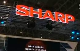 Foxconn và Sharp hoàn tất sáp nhập với giá trị gần 3,5 tỷ USD