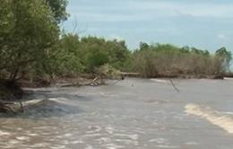 Đê biển Tây Cà Mau xuất hiện 3 điểm sạt lở nghiêm trọng