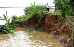 Cà Mau lập phương án di dân mùa mưa bão