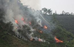 Liên tiếp xảy ra cháy rừng tại nhiều tỉnh thành