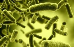 """Con người có nguy cơ đối mặt kỷ nguyên """"hậu thuốc kháng sinh"""""""
