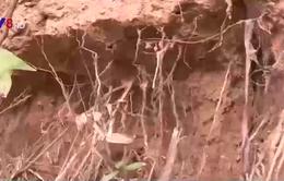 Quảng Trị: Thiếu kinh phí khắc phục sạt lở bờ sông