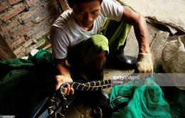 Những hiểm họa từ ngành công nghiệp thời trang da rắn