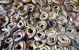 Góc khuất kinh hoàng của ngành công nghiệp thời trang da rắn tại Indonesia