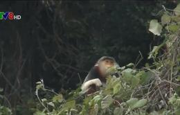 Đà Nẵng thanh tra vụ phá rừng Sơn Trà