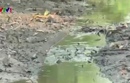 Sông cạn trơ đáy, người dân Bạc Liêu thiếu nước sinh hoạt