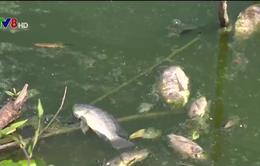 Cá chết ở sông Hinh nghi do nhà máy xả thải