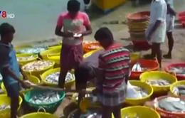Hải quân Sri Lanka bắt giữ nhiều ngư dân và tàu cá Ấn Độ