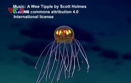 Phát hiện loài sứa như UFO dưới biển sâu