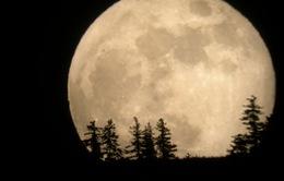 Khi nào siêu Mặt Trăng xuất hiện tại Việt Nam?