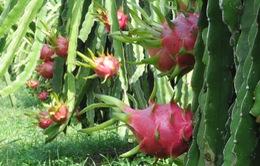 Tìm kiếm thị trường cho nông sản Việt trong bối cảnh hội nhập