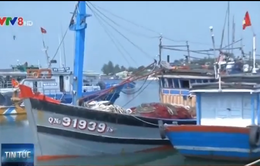 Tàu cá Quảng Nam bị tàu Trung Quốc cướp phá ngư lưới cụ