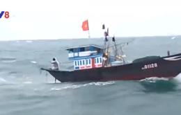 Quảng Nam cứu thành công tàu cá gặp nạn trên biển