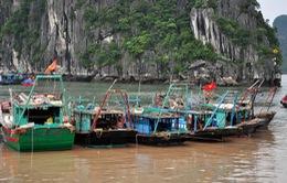 Quảng Ninh, Thái Bình: Tàu thuyền đã về nơi tránh bão an toàn