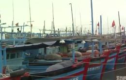 """Phú Yên: Cửa biển bồi lấp, hàng trăm tàu câu cá ngừ """"mắc cạn"""""""