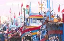 Bình Định: Hỗ trợ mua bảo hiểm cho hơn 2.200 tàu cá đánh bắt xa bờ