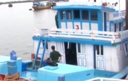 Bình Thuận: Bắt tàu cá chở người nhập cảnh trái phép