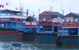 Bọc Composite cho tàu cá - Giải quyết sức ép khan hiếm gỗ