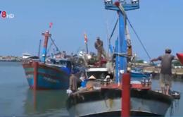 Tàu đánh bắt xa bờ của ngư dân TT-Huế khai thác hết công suất