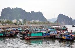 Quảng Ninh, Nam Định, Thanh Hoá, Nghệ An tích cực phòng, chống bão số 3