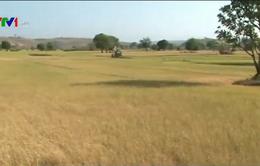 ĐBSCL: Hàng triệu người dân bị ảnh hưởng bởi hạn hán và xâm nhập mặn