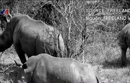 Việt Nam triển khai hoạt động bảo vệ tê giác tại 6 thành phố lớn