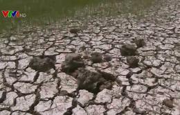 Việt Nam mất 15.200 tỷ đồng vì hạn, mặn