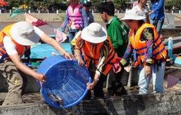 Khuyến cáo dân không thả cá giống điêu hồng khi độ mặn tăng cao