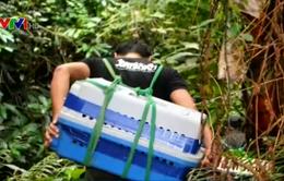 Thả 46 cá thể tê tê Java về tự nhiên