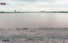 Thái Bình tập trung cứu lúa sau bão số 1