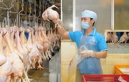 Sẽ xuất khẩu thịt gà sang Nhật Bản