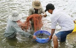 Khởi tố vụ mua giấy tờ kiểm định sản phẩm thức ăn thủy sản