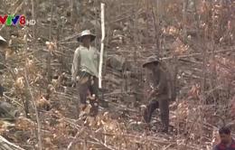 Nguy cơ cháy rừng vì đốt thực bì trong mùa nắng nóng