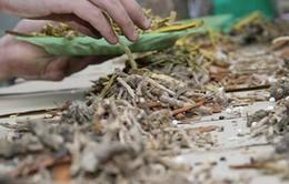 Thuốc bắc chứa thuốc diệt nấm cao hơn 313 lần cho phép ở Hongkong