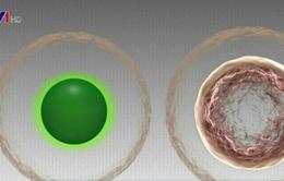 Phương thức tránh thai mới chiết xuất từ tảo biển