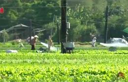 Báo động tình trạng lạm dụng thuốc bảo vệ thực vật cho nông sản