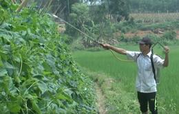 Dùng thuốc trừ sâu bằng thảo mộc hướng đi mới của nông dân Nghệ An
